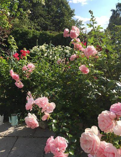 Rosen im Garten des Ferienhauses